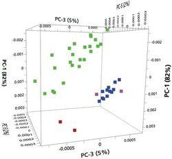 Vibrational Spectroscopic Discrimination of Herbal Medicines: Polygala senega, Polygala tenuifolia, and Glinus oppositifolius