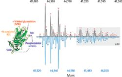 High-Resolution Native Mass Spectrometry Opens the Door for Detailed Analyses of Intact Protein Complexes