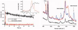 Blink and You Miss It—Catching Fleeting Catalytic Intermediates by High-Speed 785 nm NIR Raman Spectroscopy