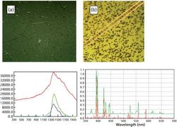 Raman Spectroscopy for Identification of Contaminant Materials in Pharmaceuticals