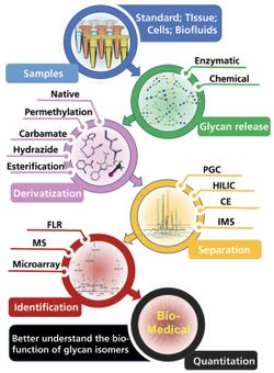 A Brief Review of Recent Advances in Isomeric N- and O-Glycomics