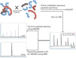 Determination of Very Low Abundance Diagnostic Proteins in Serum Using Immunocapture LC–MS/MS