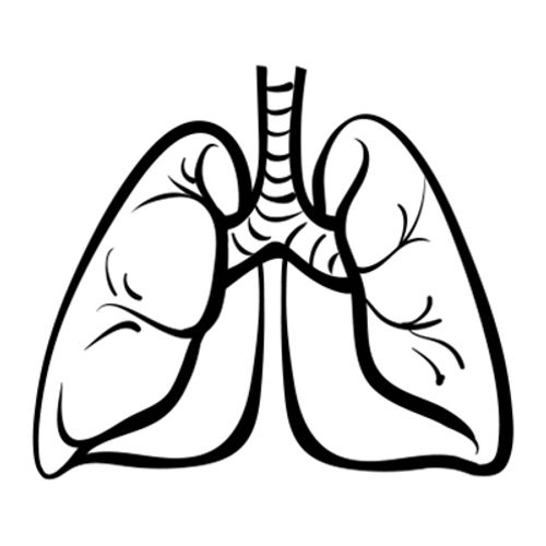Research on Molecular Mutations Guides Use of Targeted Therapies in Lung Cancer