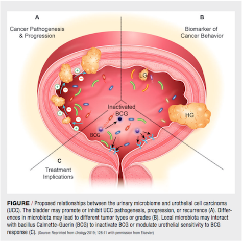 Reprinted from Urology 2019; 126:11 with permission from Elsevier