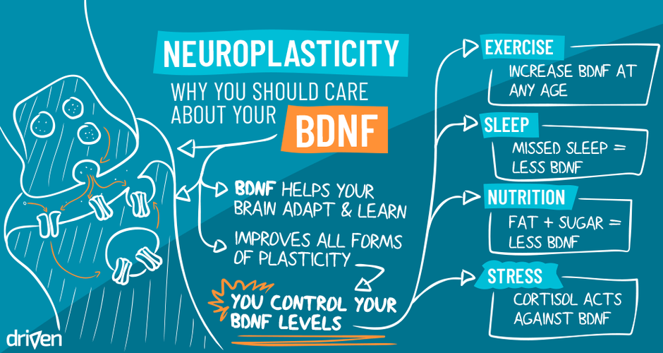 Why you should care about your BDNF
