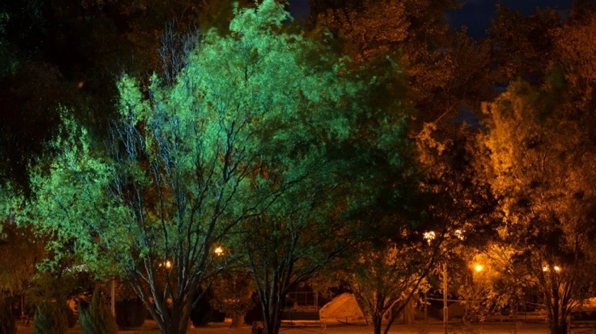 Trees at night lit by street lights.