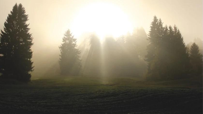 Sunbeams shining through pine trees.