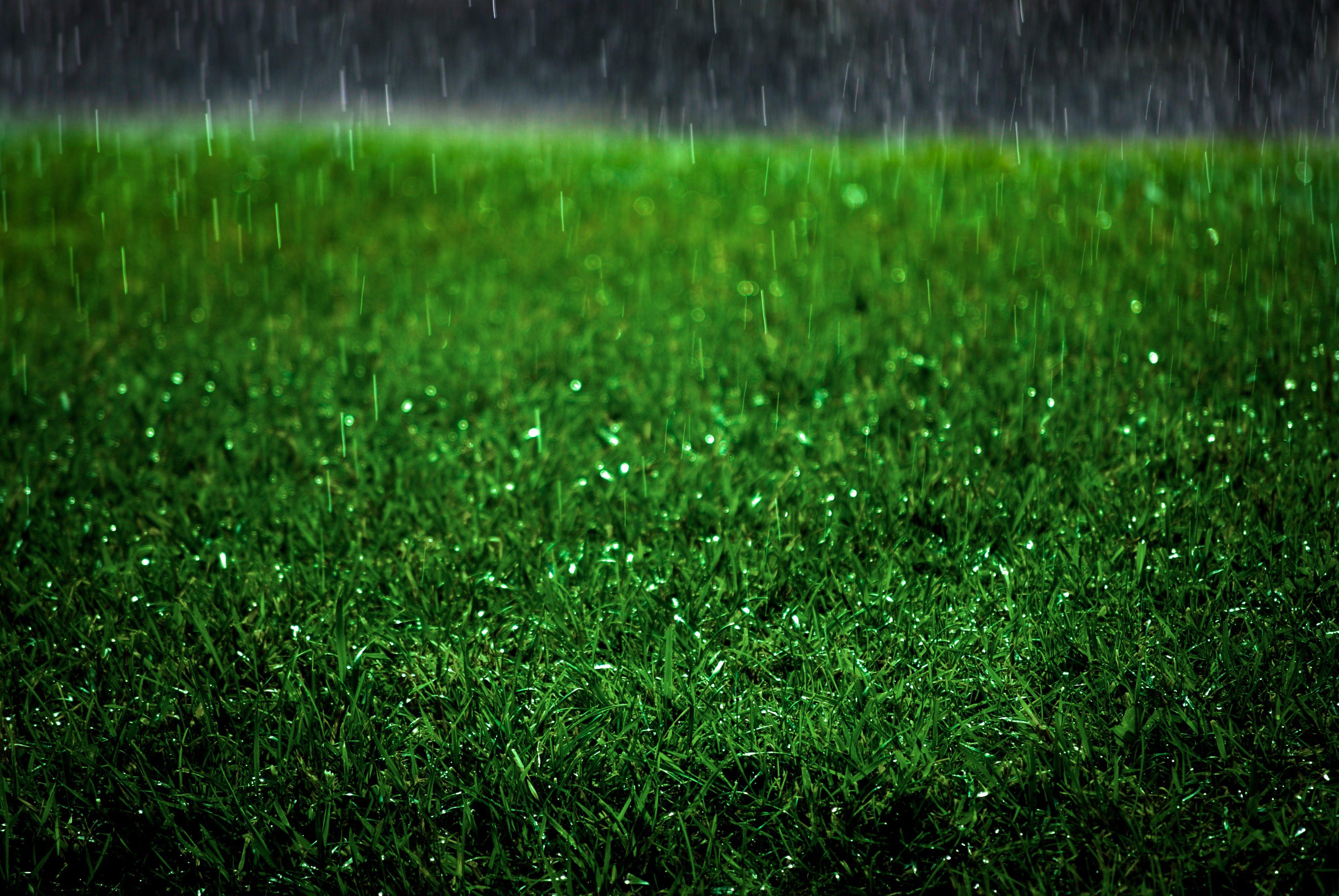 Raining on a lawn