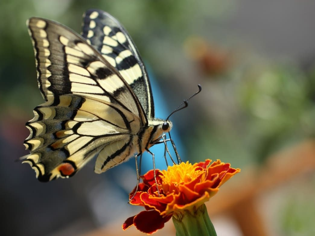 image_A Beginner's Guide to Butterfly Watching