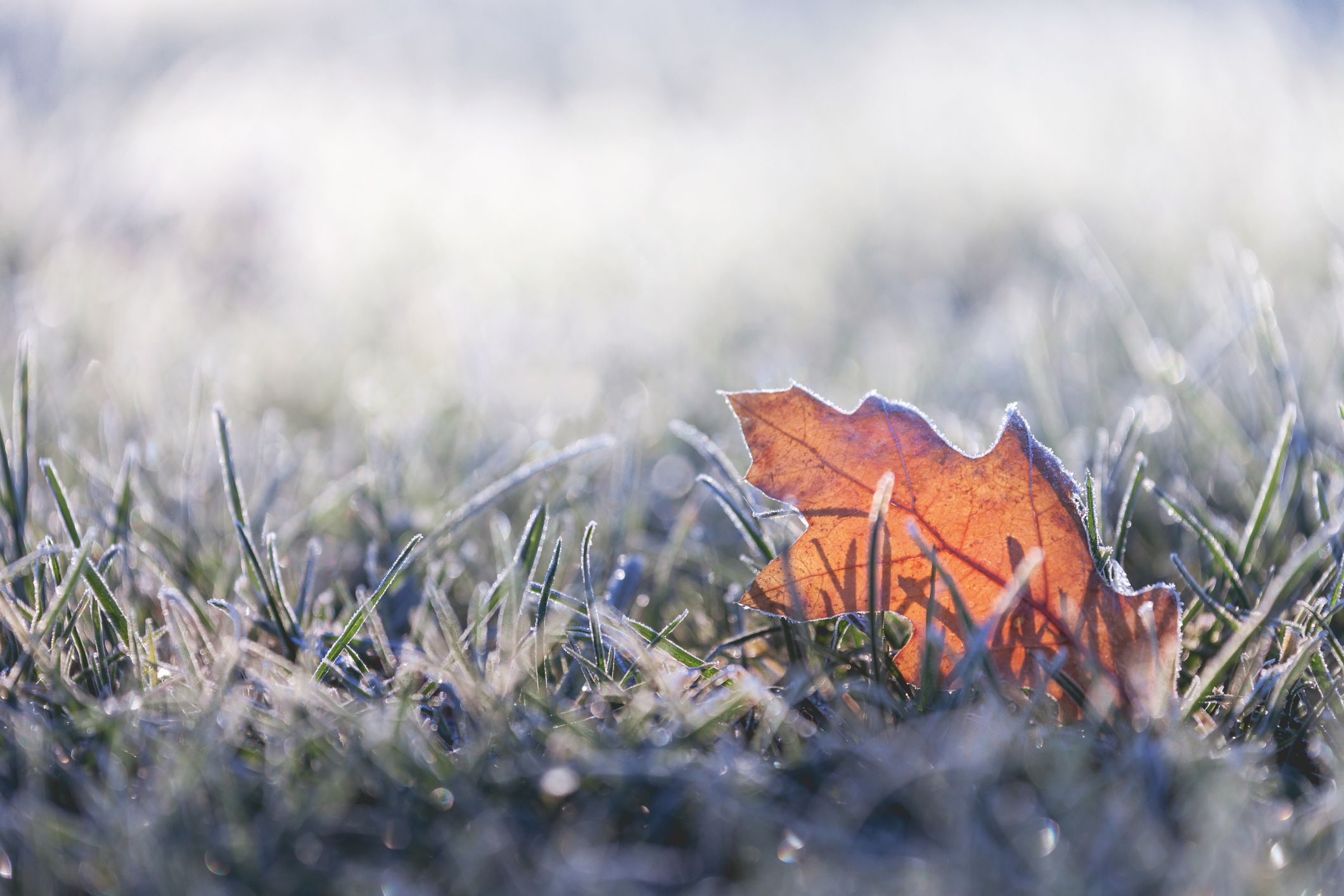 image_5 Easy Lawn Winterization Steps