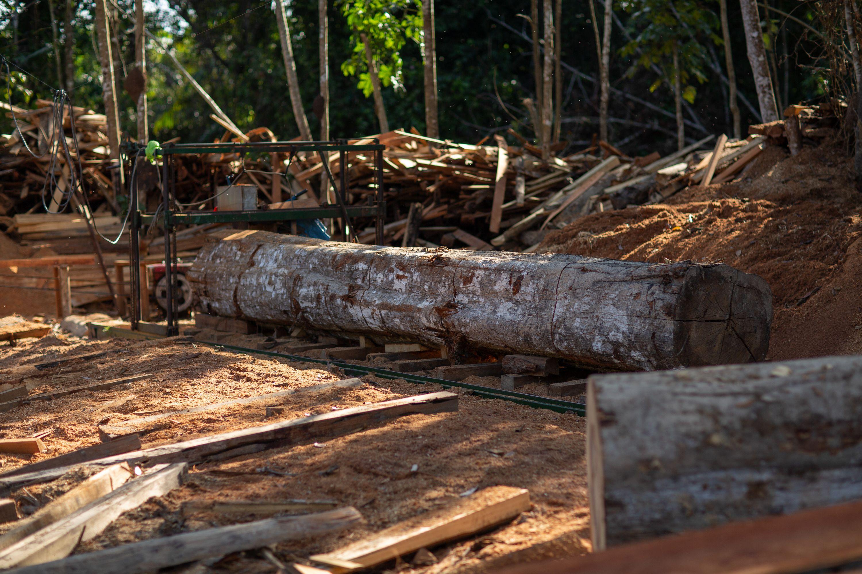 Fallen logs.
