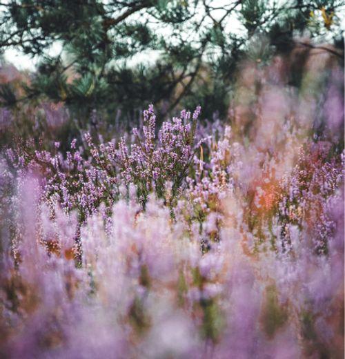 Blommor på en äng
