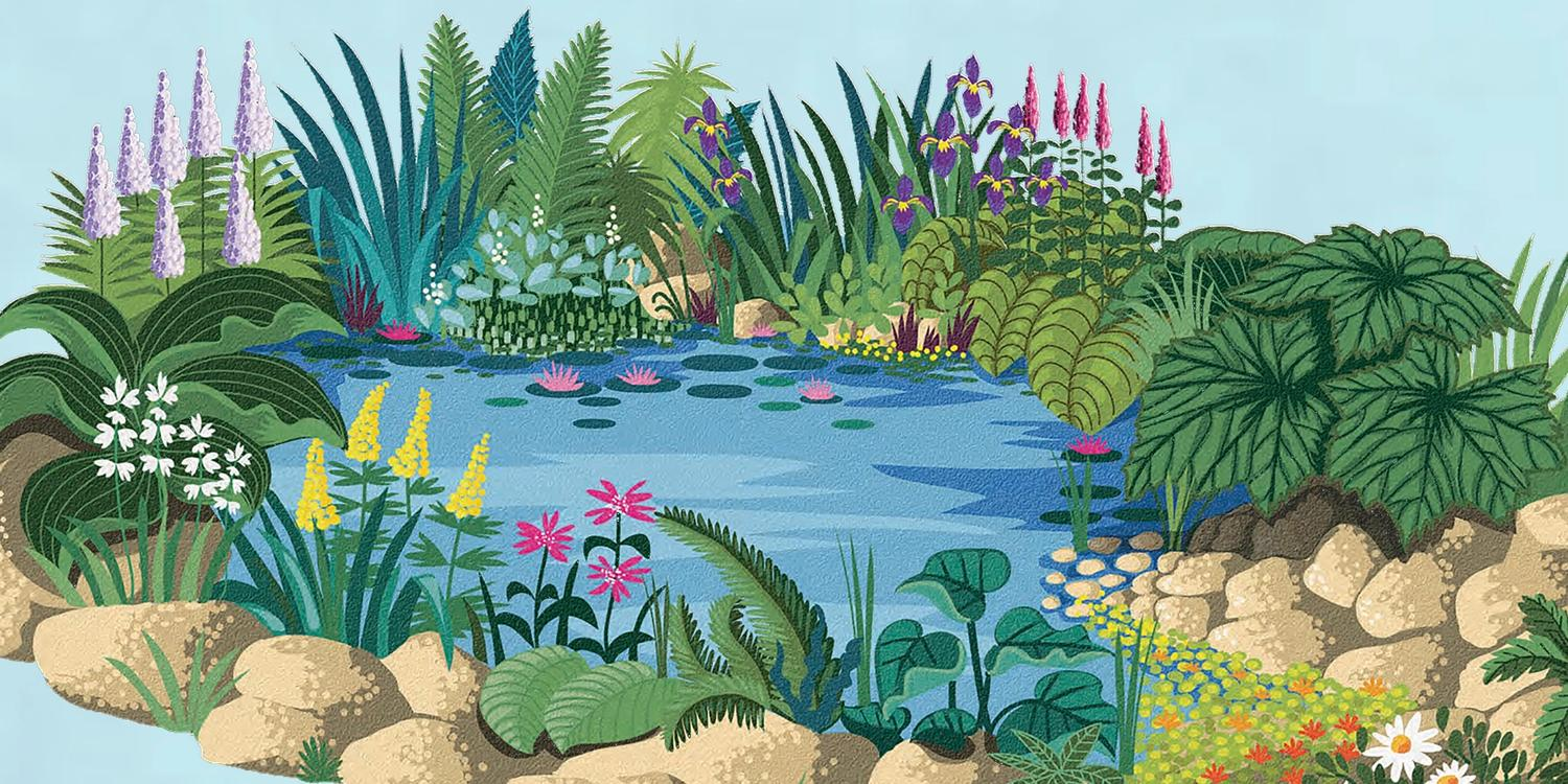 Illustration of pond surrounded by flowers, rocks and leaves