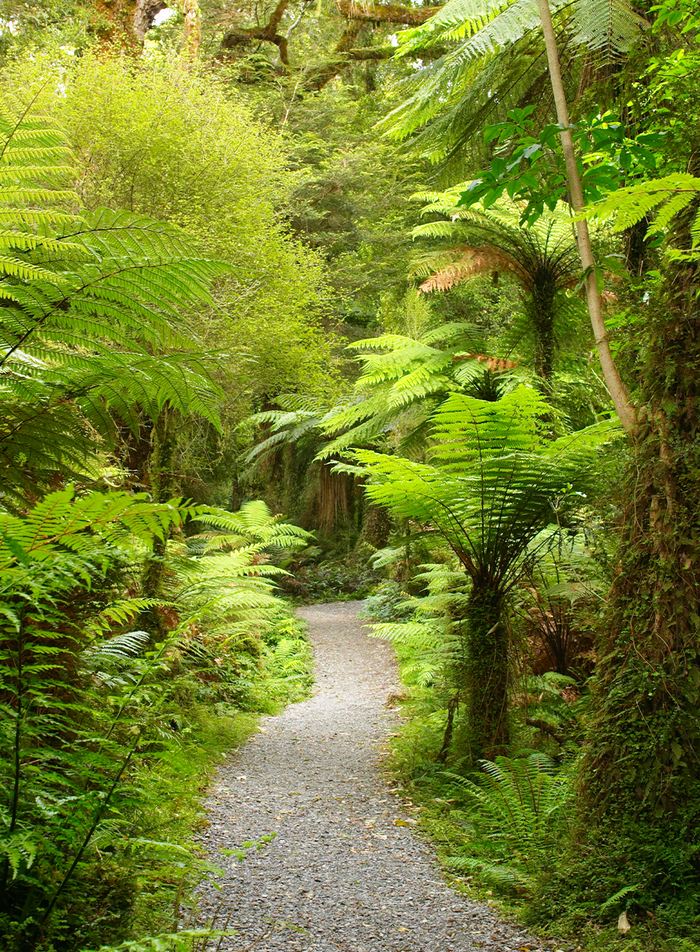 Walking trail in a bush surrounded by ferns
