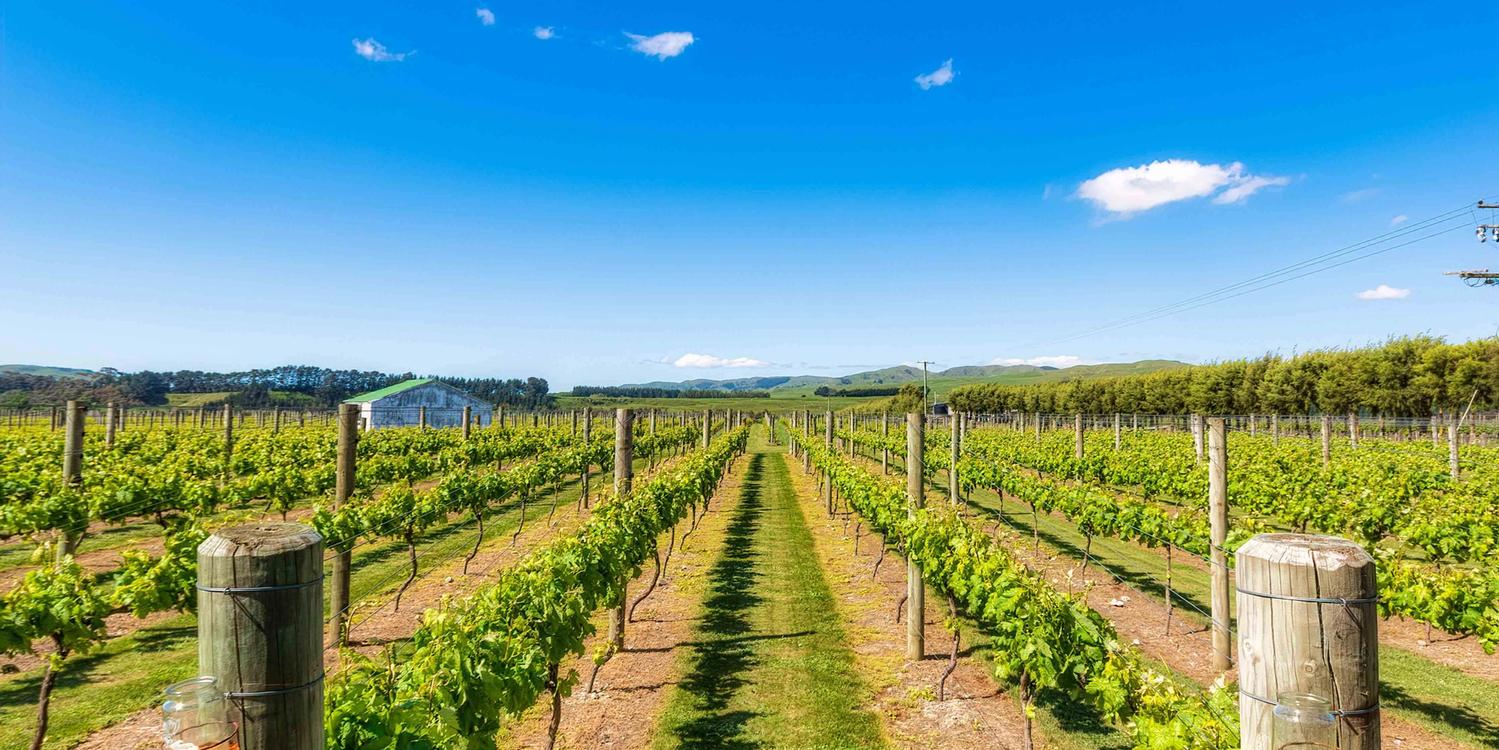 Vineyards in Wairarapa