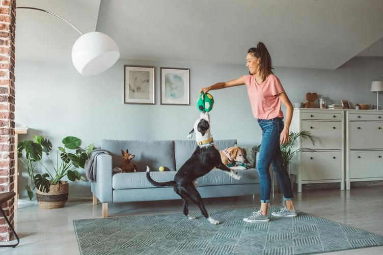 Petiquette: Rules for Living in a Flat with a Pet