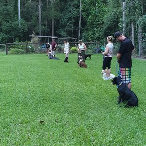 Group Obedience class 2019