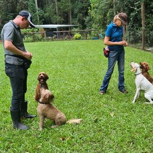 Kate and Sam doing great training with Bailey, Honey, Soda and Ginger