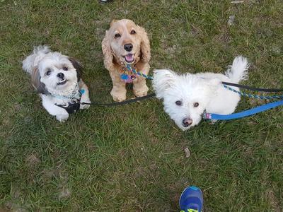 Dogs behaving together