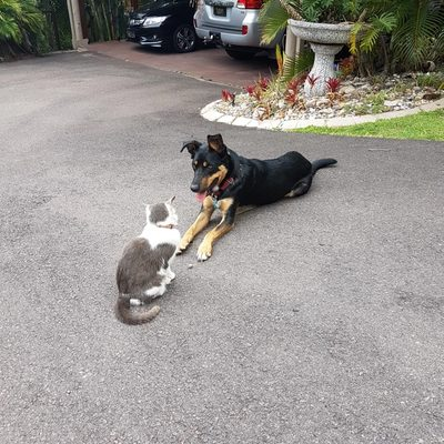 Dog socialising on driveway with a cat