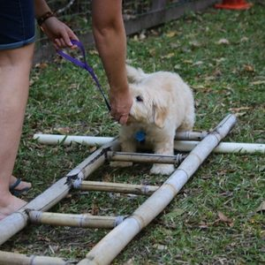 Building confidence in puppies