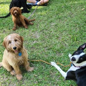 Teddy, Maisie, Lucy and Marley just hanging out