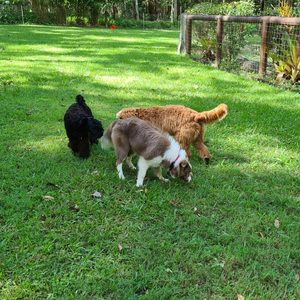 Soda, Lloyd and Dottie looking for lonely treats