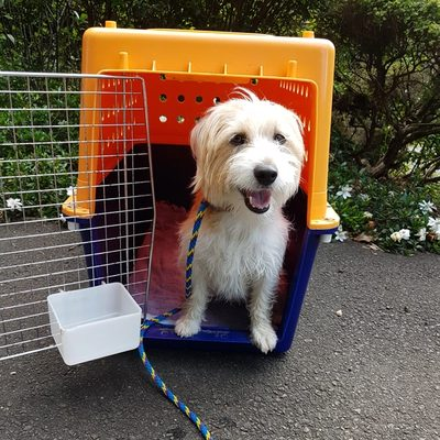Crate Training with Dixie