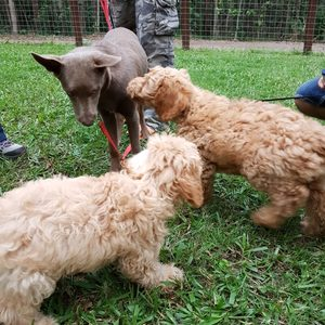 encouraging calm interactions with puppies