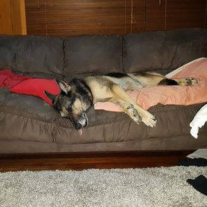 The true meaning of 'Dog Tired'