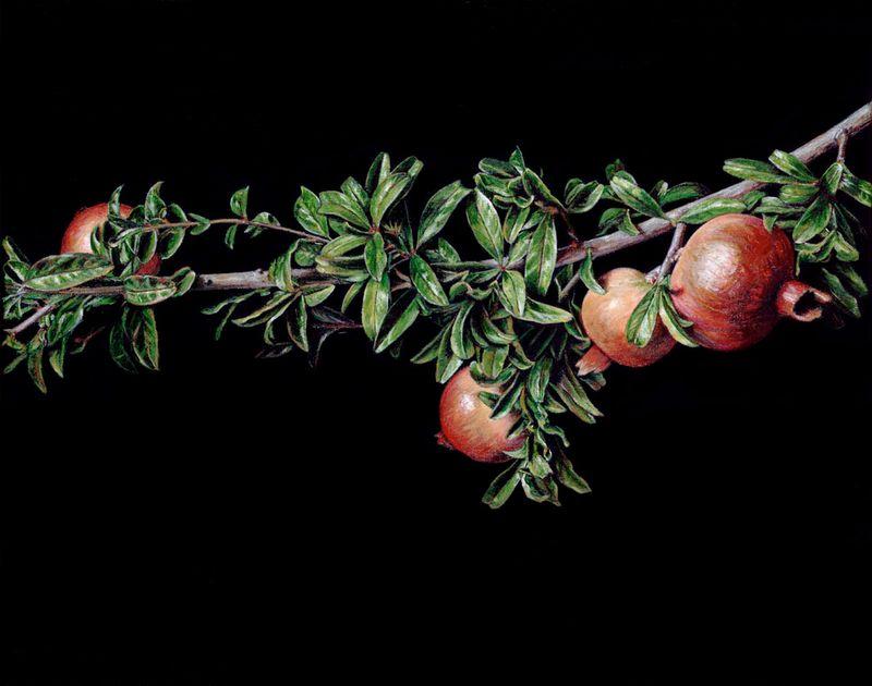Still Life with Pomegranates