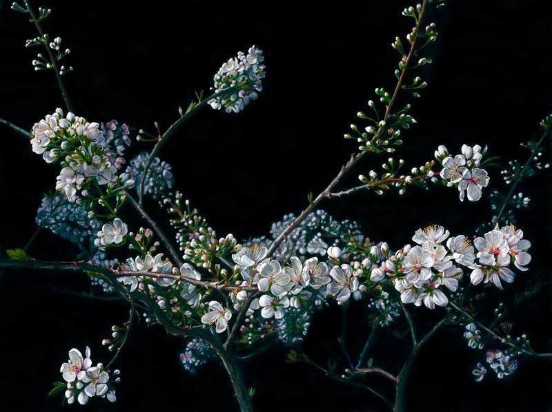 Still Life with Blossom
