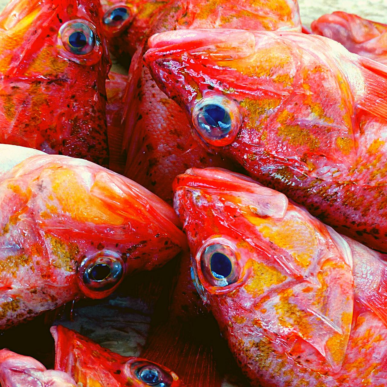 No more fish in the sea