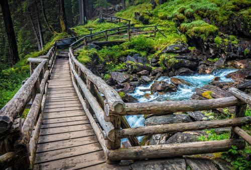 Vita Alpina: Biowatching WWF nel Parco dello Stelvio cover