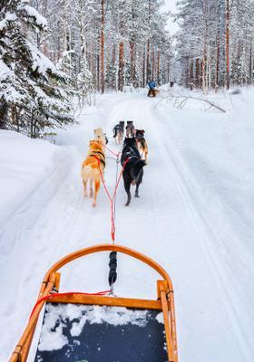 slitta trainata da cani sulla neve a tarvisio