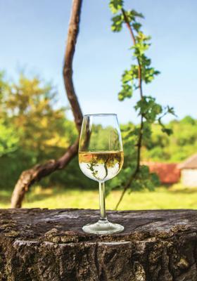degustazione vini a motovun in croazia