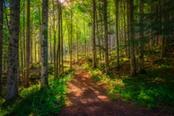 bosco del passo dell abetone