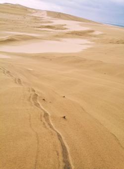 il deserto della francia, la duna di pyla