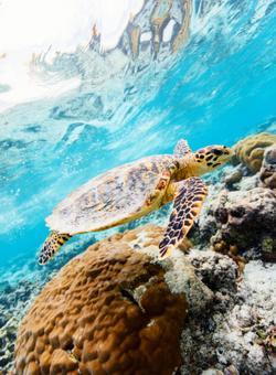 nuotare con le tartarughe sulla barriera corallina
