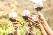 degustazione di vini in sicilia