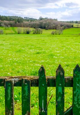 arzua natura erba verde