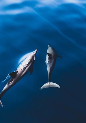 ocean sanctuary alle maldive dove vedere i delfini