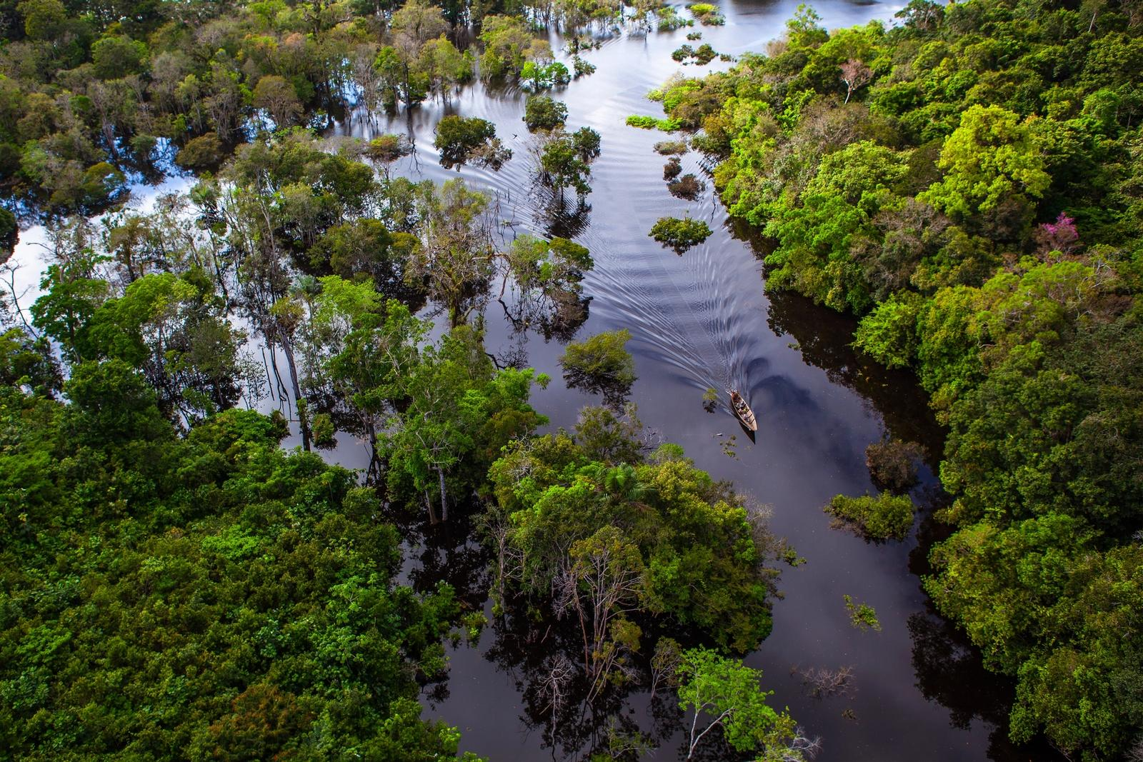 foresta pluviale in amazzonia