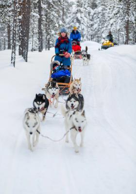 slitta con husky sulla neve