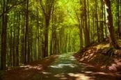 trekking a camaldoli