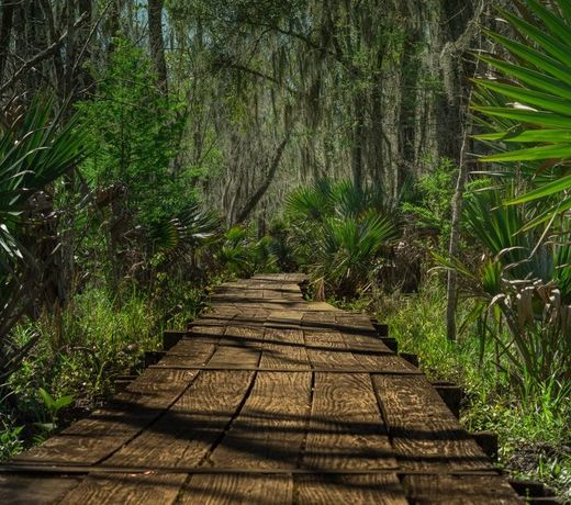 sentiero in legno che porta nella foresta