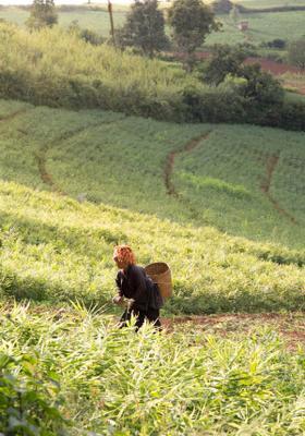 donna in una piantagione di tè