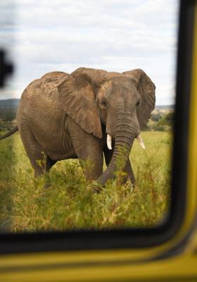 elefante al tarangire national park