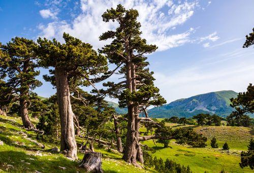 Trekking nel Parco Nazionale del Pollino cover