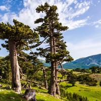 alberi nel parco nazionale del pollino in basilicata